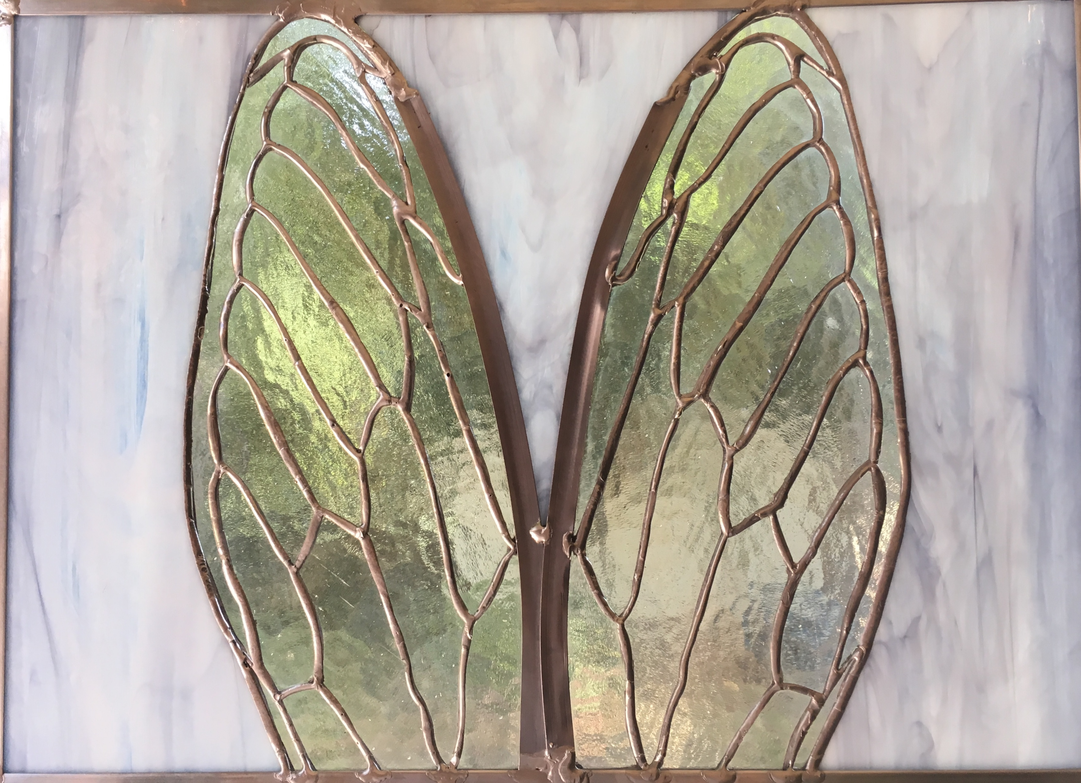 Cicada wings with leading edges joined.